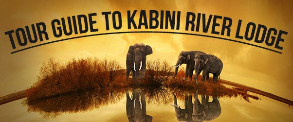 Tour Guide To Kabini River Lodge